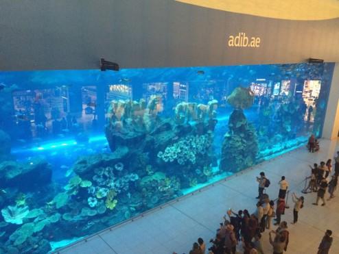 aquarium-dubai-mall-mister-emma